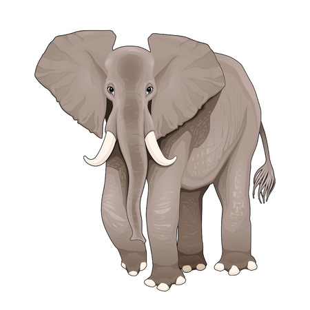 Elephant illustration, isolated element. Illustration