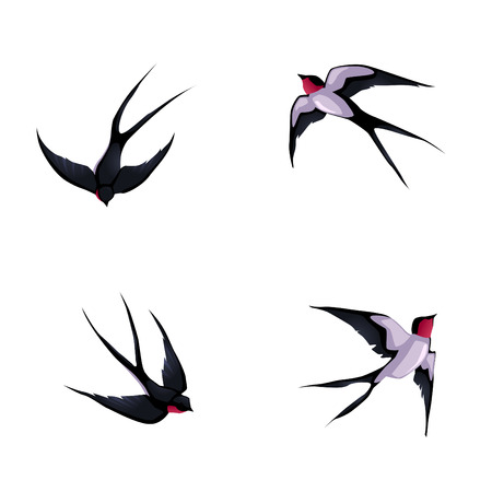 Four swallows. Vector cartoon isolated animals. Çizim