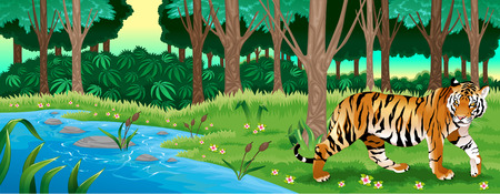 Green forest with a tiger. Vector cartoon illustration Vector