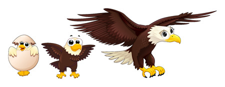Development of the eagle in different ages. Vector isolated characters.
