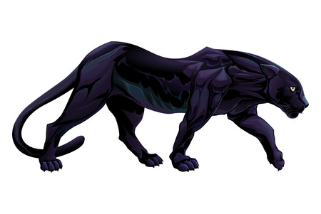 black panther: Illustration of a black panther. isolated object.