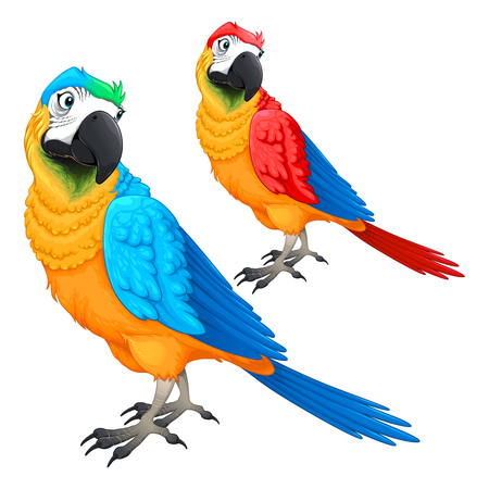 Funny parrots in two different colors. Vector cartoon isolated animals.