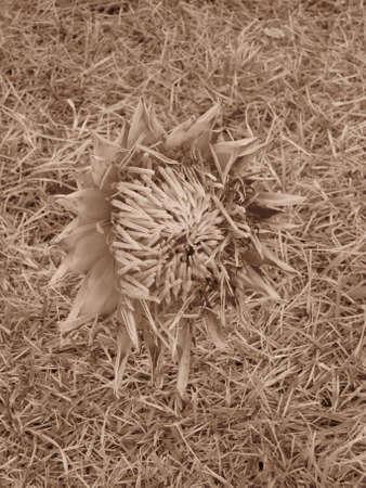最前線でも、見知らぬ人の花と草の不思議 写真素材