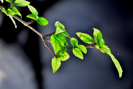 Green leaves with black background