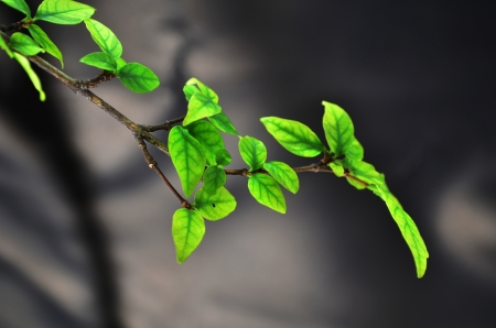 Green leaves with gray background