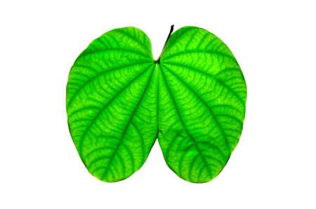 green leave Stock fotó