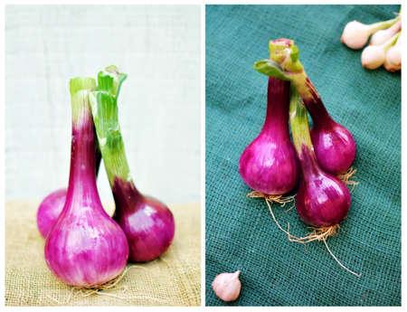 red onion Reklamní fotografie