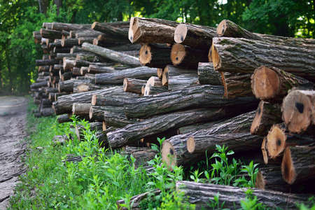 timbering: felled trees Stock Photo