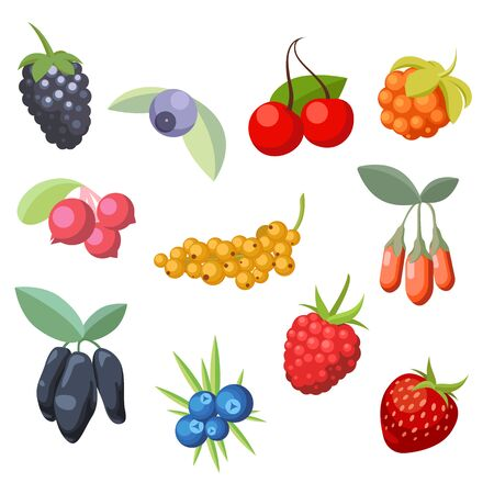 Set of various stylized ripe fresh berries. Berry collection Illustration