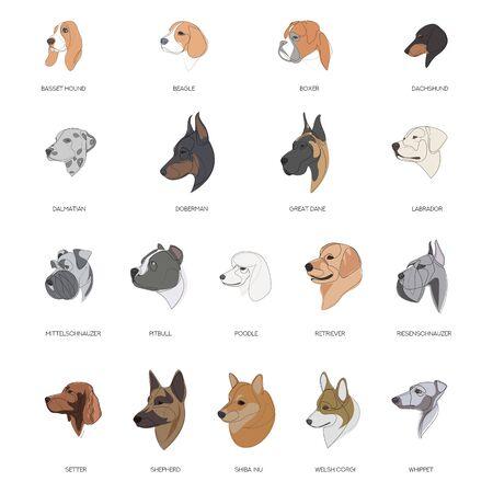Razze di cani disegnati in un set di stile minimale. Illustrazione vettoriale minima Vettoriali