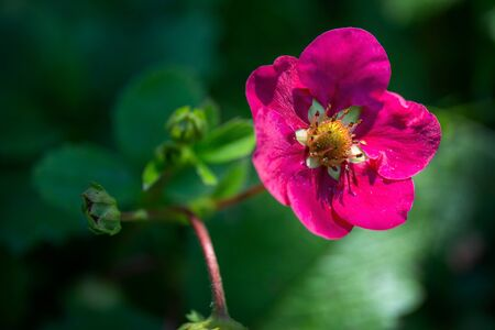 Pink flower with green buds on blurred background Stock fotó