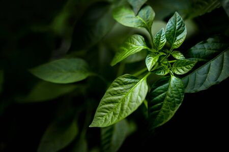 Abstract green leaves texture, nature background, dark tone wallpaper. Natural green leaves pattern with moody feel