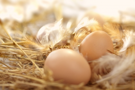 巣の中の新鮮な卵 写真素材