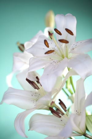lilies on green background