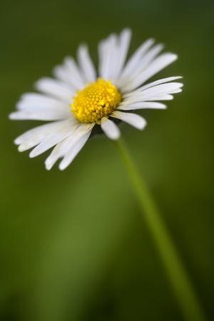daisie: Daisie e la natura