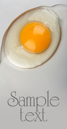 Organic egg yolk closeup photo