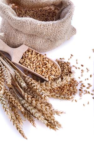 Ripe wheat in a linen bag with a wooden spatula Standard-Bild