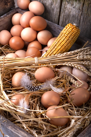 roost: Eggs in a nest of straw, in an old wooden roost Stock Photo