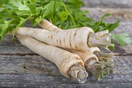 freshly harvested parsnip on an old rustic wooden table