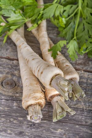 parsnip: freshly harvested parsnip on an old rustic wooden table