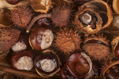 Chestnuts as a background, the concept of autumn fruits in autumn colors Reklamní fotografie