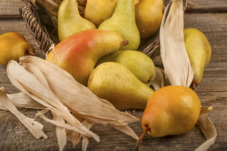 Organic pears raised in a local orchard, the concept of healthy food from autumn fruits