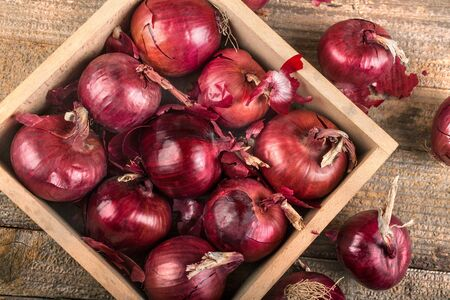 Organic red onion grown in a local garden, the concept of healthy food from autumn fruits