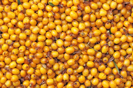 lurid: New-gathered berries of seabuckthorn as background Stock Photo