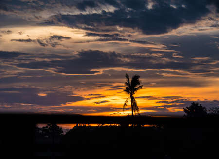 sunset landscape Dark silhouettes of dead coconut tree, amazing cloudy sky on sunset at Bangkok, Thailand.