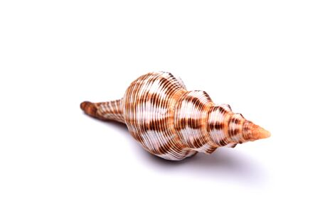 abstracted: Conch in white background
