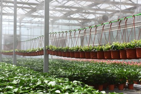 gules: Green plants in green house Stock Photo