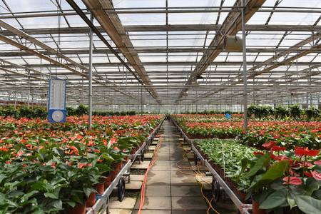 moisture: Moisture meter in Greenhouse