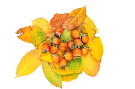 fruitage: Small yellow fruit