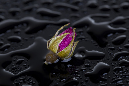 therapeutics: Dried damask rose and water drops Stock Photo