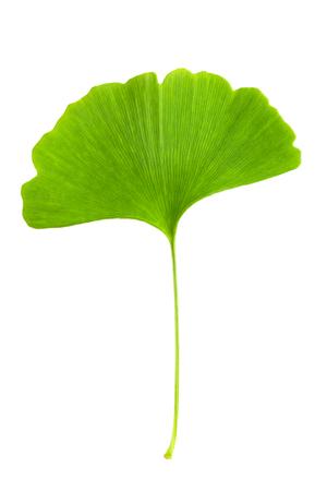 ginkgo leaf: Ginkgo leaf on the white background Stock Photo