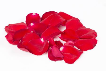 Red rose petals on a white background. Stock Photo