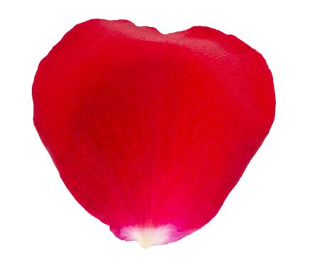 Red rose petal on a white background.