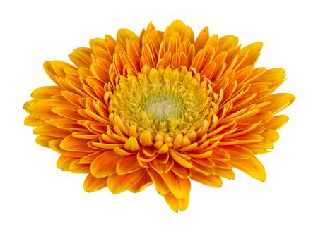 Closeup of yellow flower Stock Photo