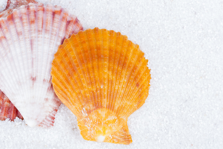 Closeup of beach shell in white sand as for a vacation background