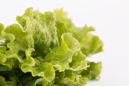 Fresh Lettuce isolated on white background. Stock Photo