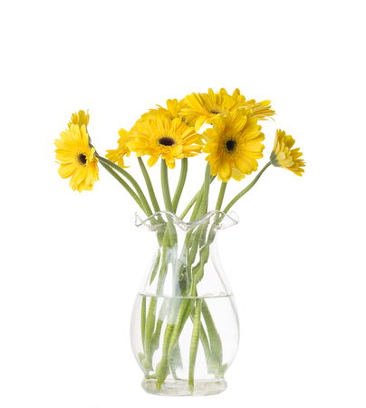 Yellow gerbera flower in a vase  isolated a white background.