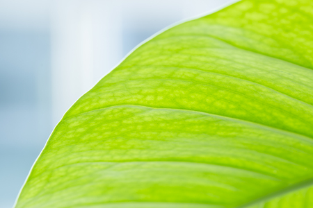 Closeup of green macro. Abstract texture background,