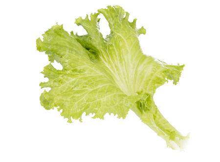 Fresh Lettuce, one leaf isolated on white background.