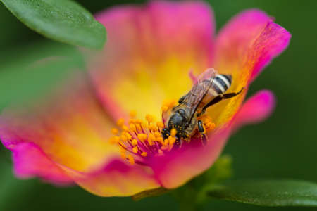 Little bees find nectar in flowers Stock Photo