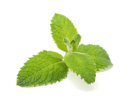 fresh green mint leaves on a white background    Stock Photo