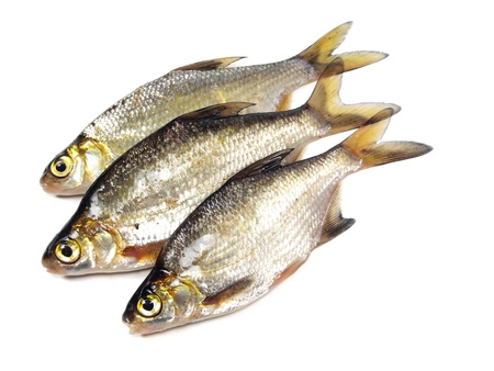 abramis: bream (abramis brama) on a white background