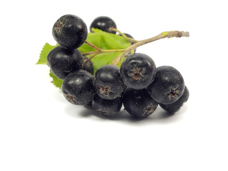 black chokeberry on a white background Stock Photo