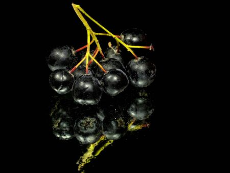 black chokeberry on a black background with water drops  photo