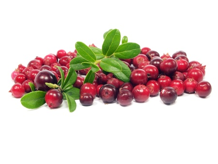 fresh cranberries on a white background         Stock Photo