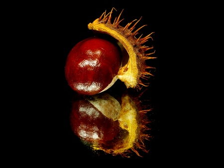 Chestnuts on a black background with water drops  photo